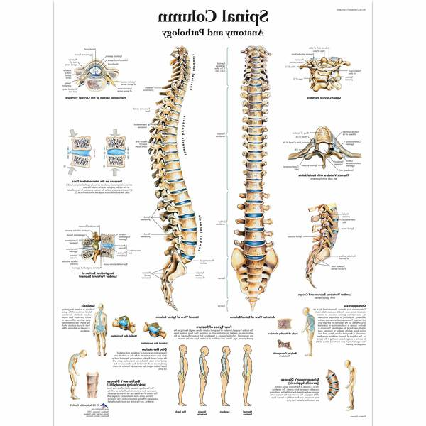 lower back physiotherapy exercises for pain
